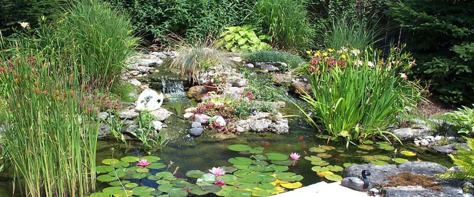 Home garden with small pond